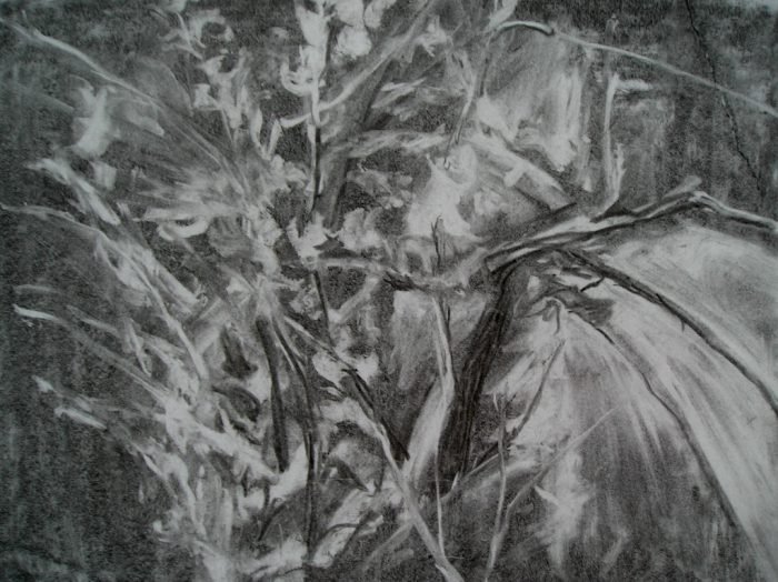 """Branches"" charcoal drawing"