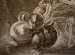 Onions charcoal on paper art courses and one day workshops