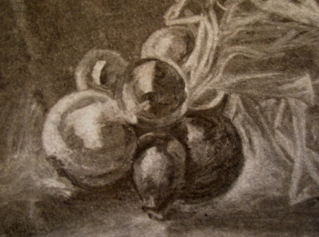 Drawing courses future events Onions charcoal on paper