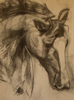 wild horse drawing using charcoal